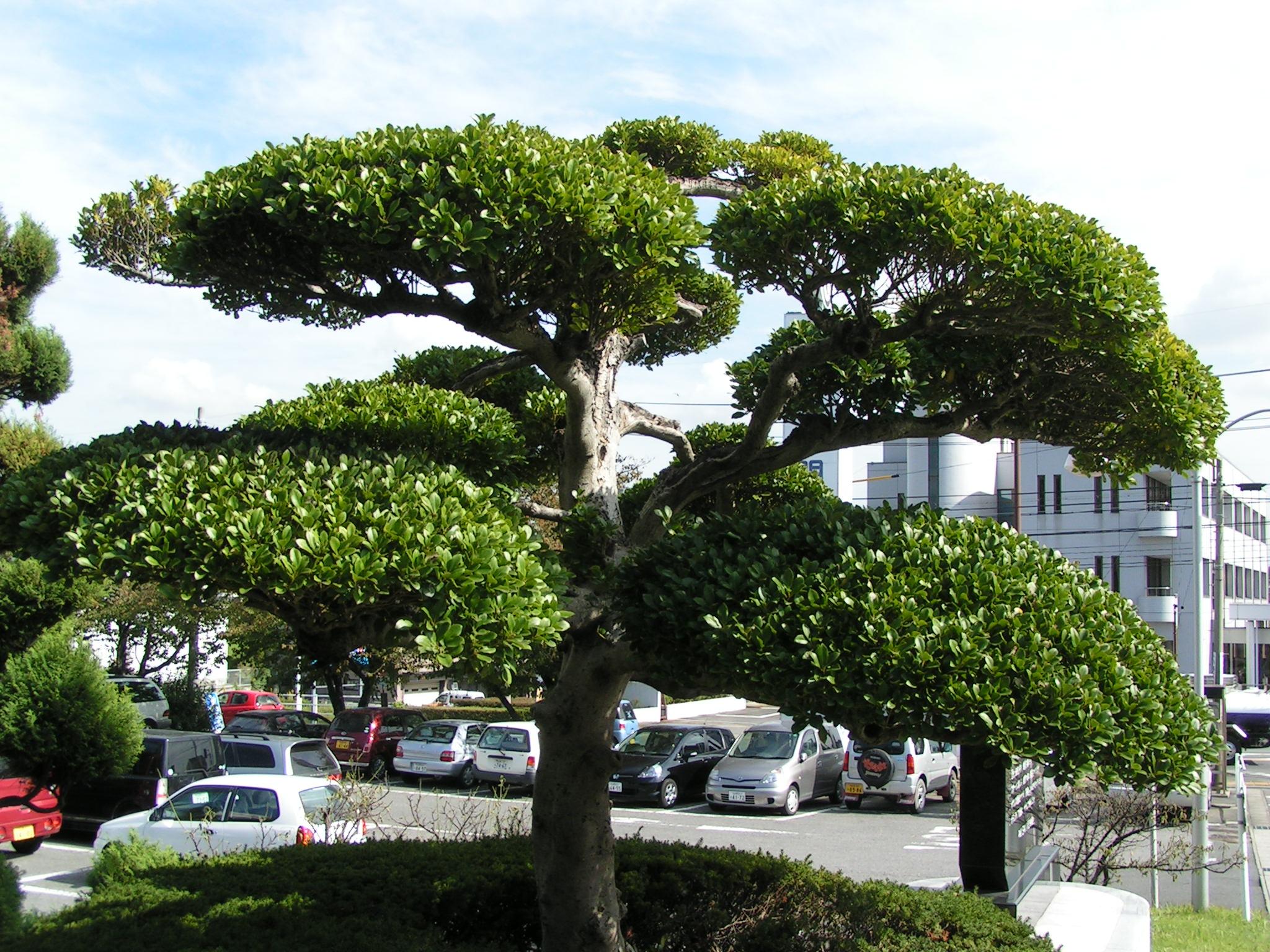 町の花・木